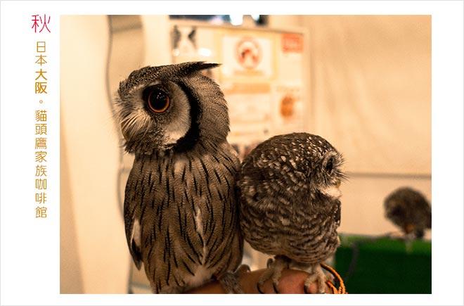 日本遊記 | 大阪Owl Family Cafe | 和萌萌的貓頭鷹近距離接觸 | 巧遇通天閣