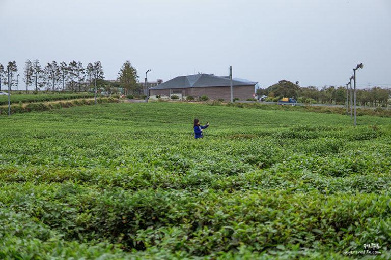 濟州遊記 2018 | 濟州自駕遊 | Innisfree濟州小屋 | O'sulloc綠茶博物館 | 休閒半天游